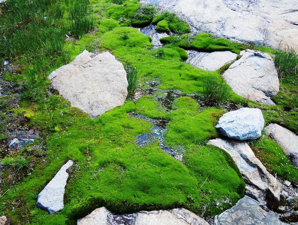 Mountain Moss Eldorado National Forest California United States
