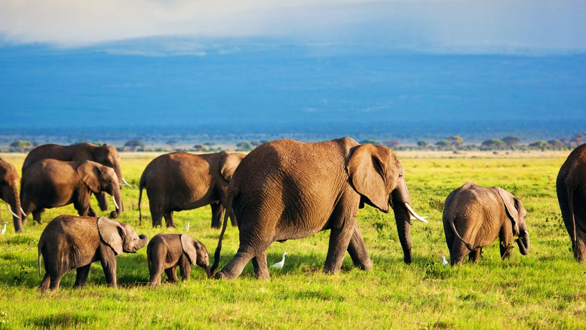 One way to support elephants without traveling? Adopt one from a distance.