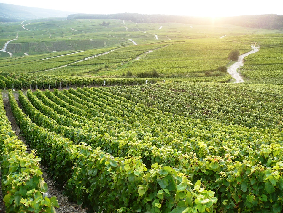 The Champagne Vineyards of Hautvillers