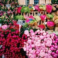 Columbia Road Shops & Flower Market London  United Kingdom