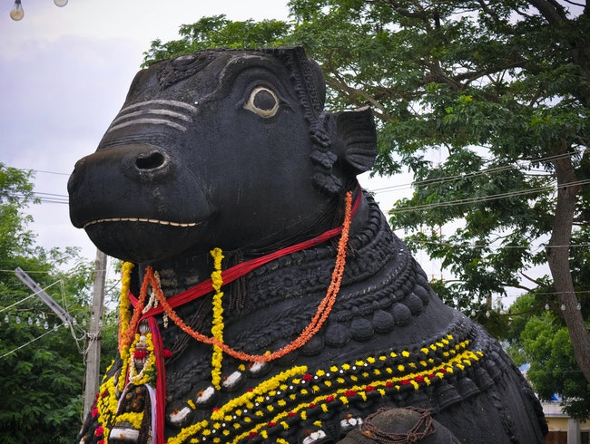 The Massive Nandi