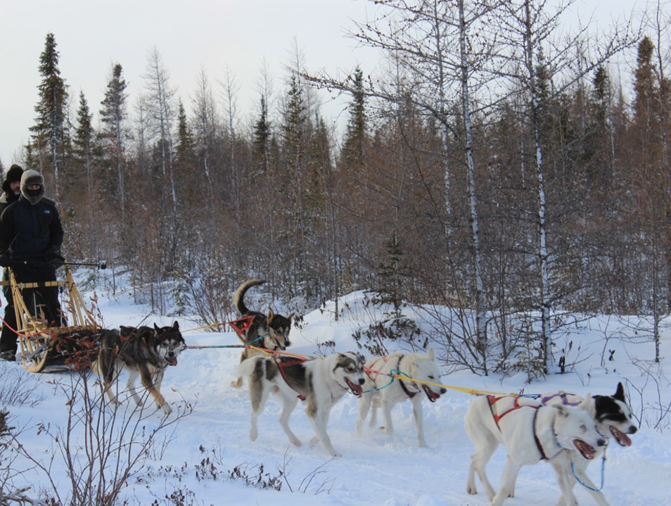 Dog Sledding With Wapusk Adventures Churchill  Canada