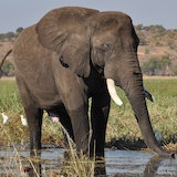 Chobe National Park