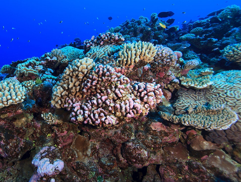 Snorkeling and Scuba Diving  Avarua District  Cook Islands
