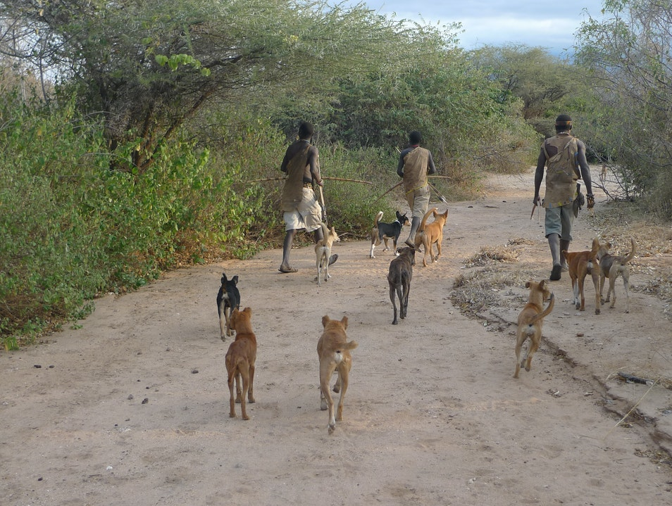 Hunting with the Hadza people Mbulu  Tanzania