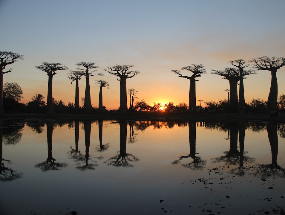 Sunset Reflection Baobabs Morondava  Madagascar