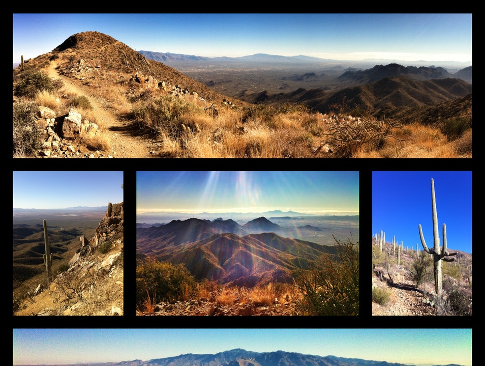 City, mountains, desert: the view from the top Tucson Arizona United States