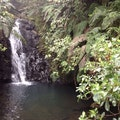 Fairy Falls Auckland  New Zealand