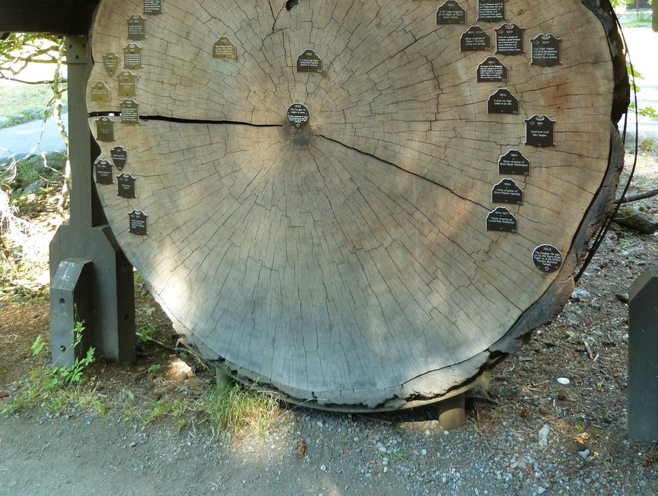 Count Your Age in Tree Rings Longmire Washington United States
