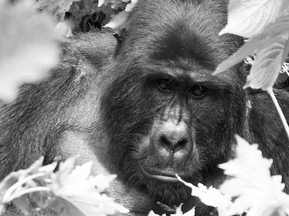Bwindi Impenetrable National Park Kinkiizi  Uganda