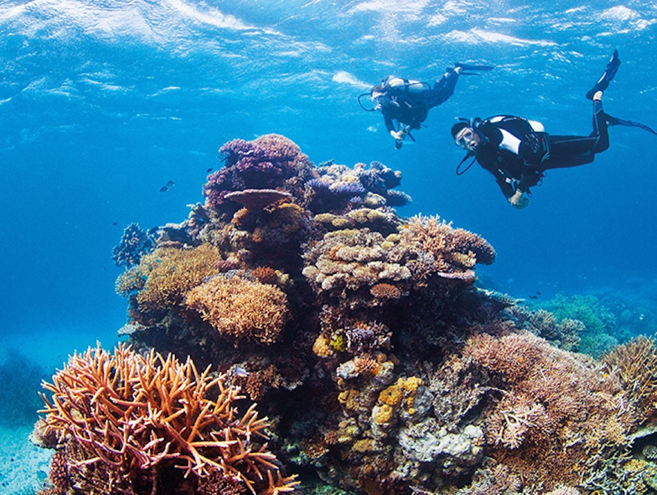 Outer Great Barrier Reef Queensland  Australia