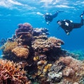 Ribbon Reefs Queensland  Australia