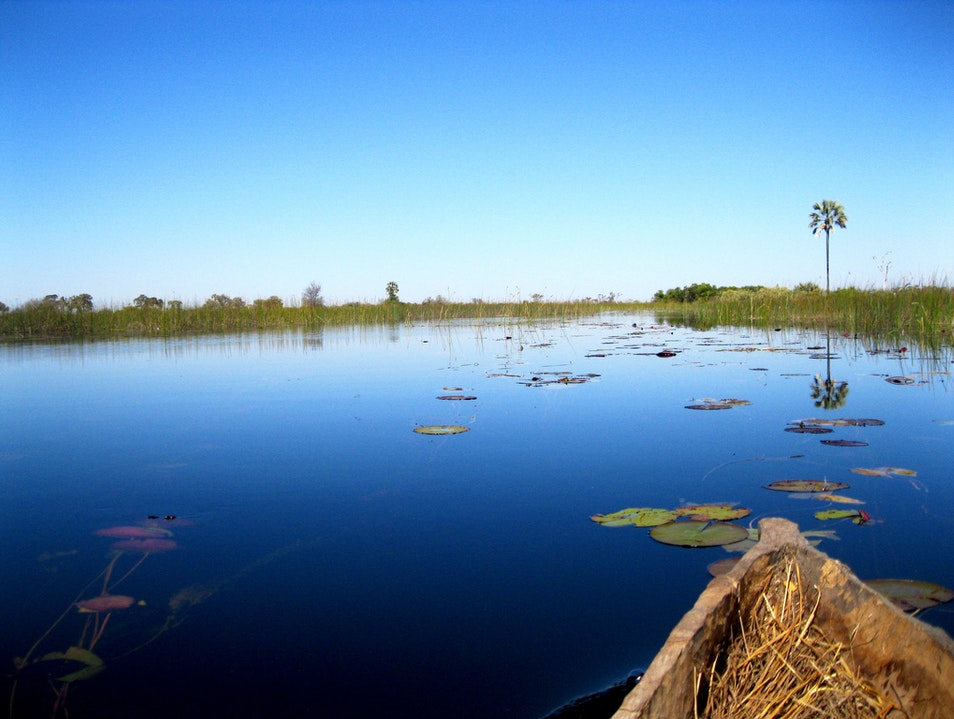 Tour Okavango on a Mokoro  Ngamiland East  Botswana