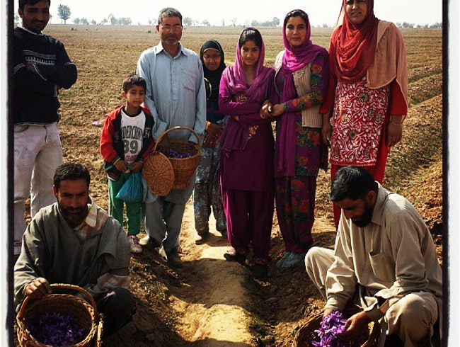 Harvesting Saffron with Farmers in Kashmir
