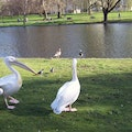 Saint James's Park London  United Kingdom
