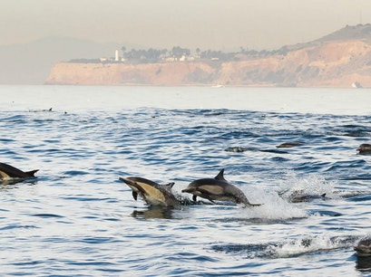 Harbor Breeze Cruises and Whale Watching Long Beach California United States