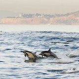 Harbor Breeze Cruises and Whale Watching