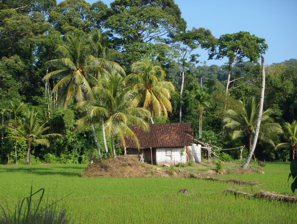 Rice Paddy Shack   Indonesia