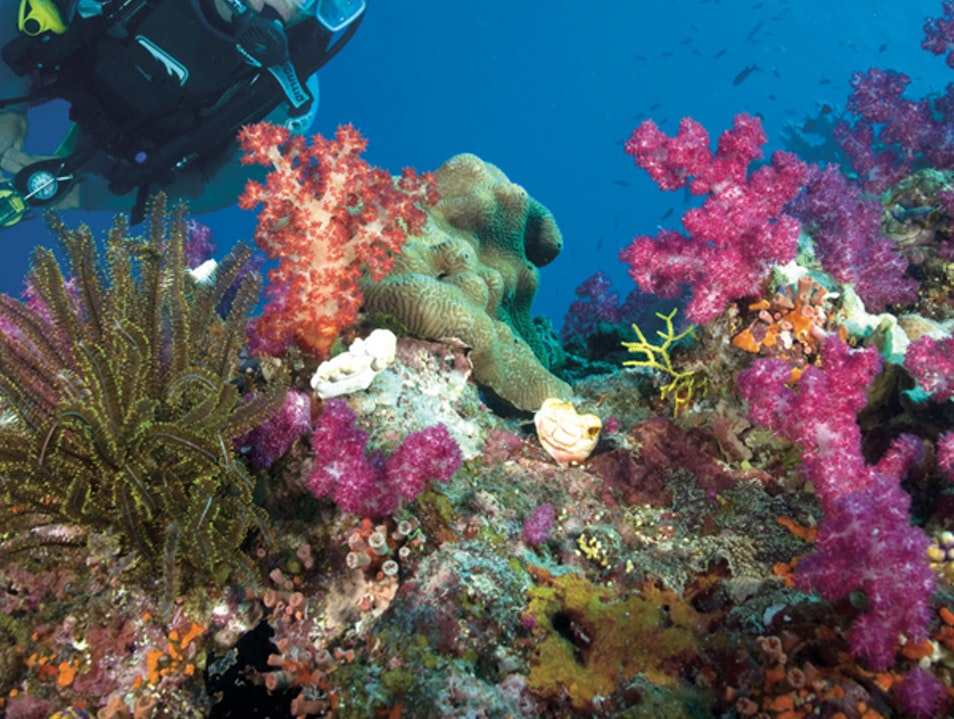 Examine the Colorful Wildlife of the Great Barrier Reef Cairns  Australia