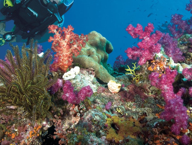 Examine the Colorful Wildlife of the Great Barrier Reef