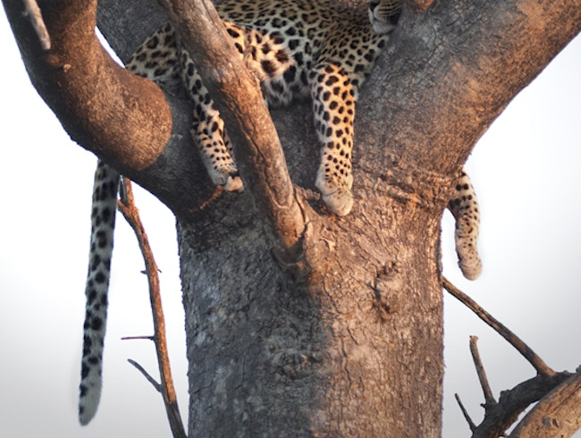 The Safari Spotting of a Lifetime in the Okavango Delta