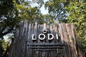 Lodi the Garden Restaurant