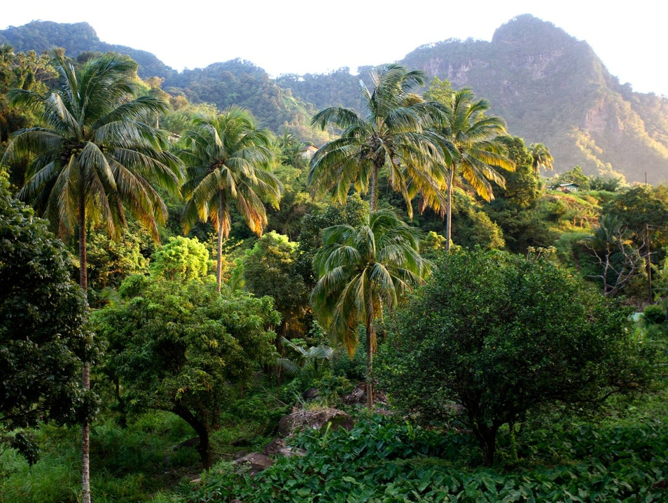 Vermont Nature Trail Charlotte  Saint Vincent and the Grenadines