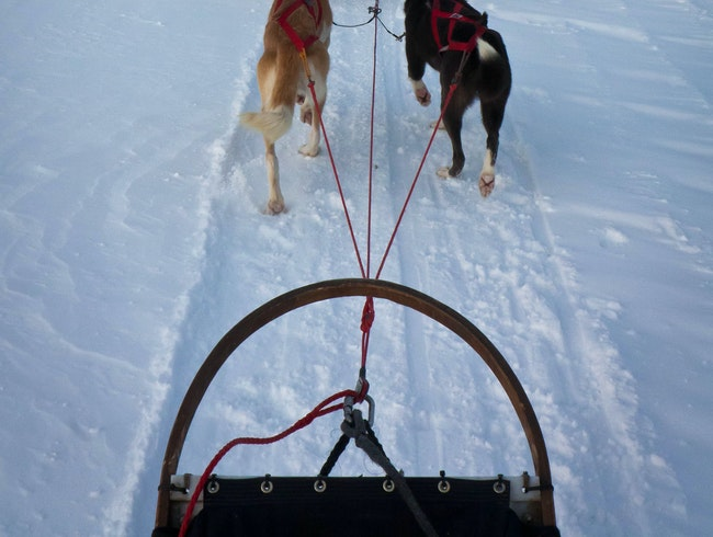 Dogsledding the Lapland Wilderness