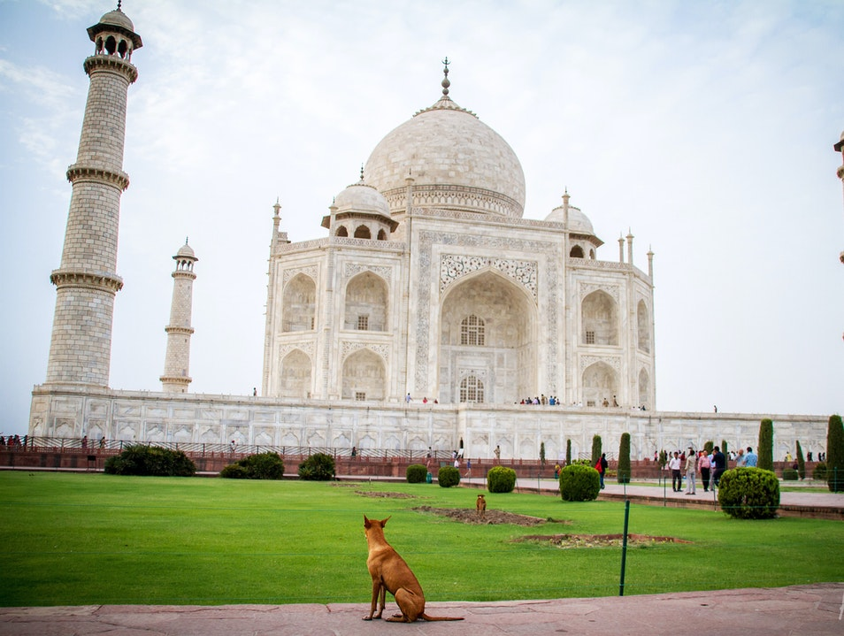 Even Dogs Are Mesmerized Agra  India