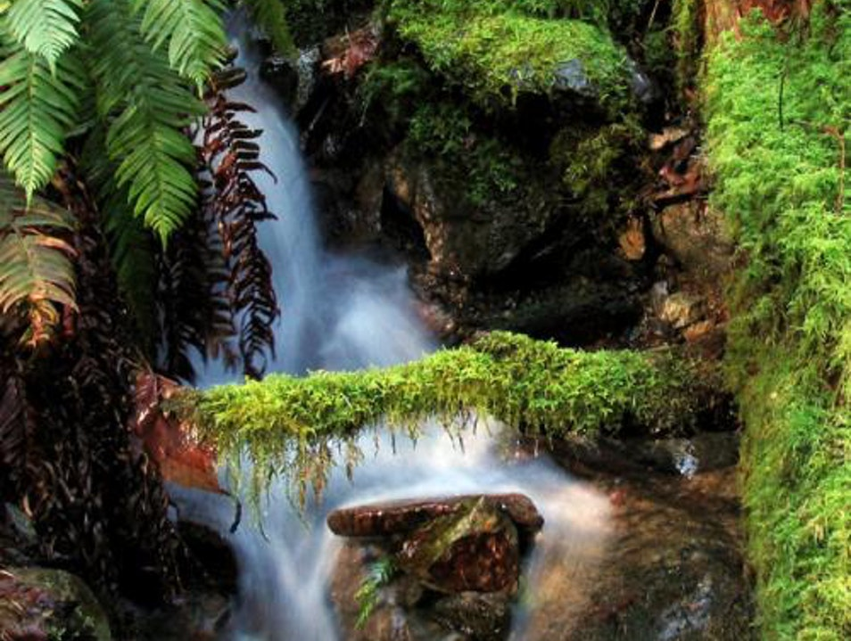 Salmon Spawning and Waterfalls at Goldstream Park