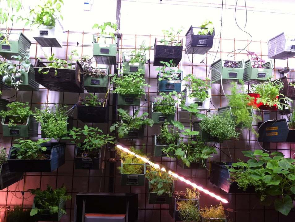 Vertical Farming and a meal Berlin  Germany