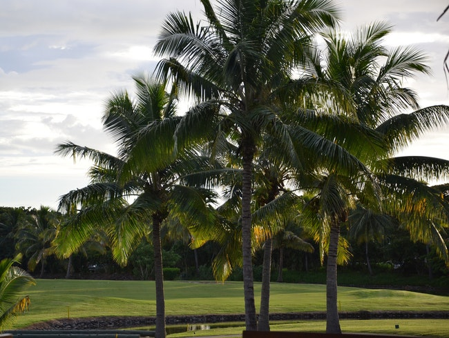 Beautiful Tropical Golf Course