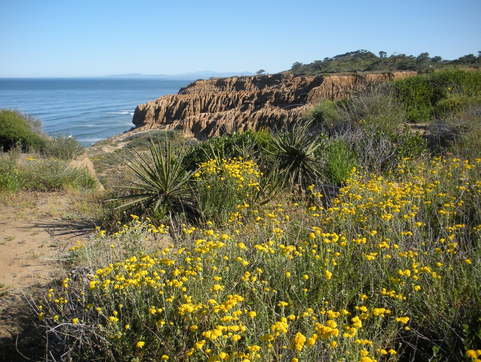Torrey Pines State Natural Reserve San Diego California United States
