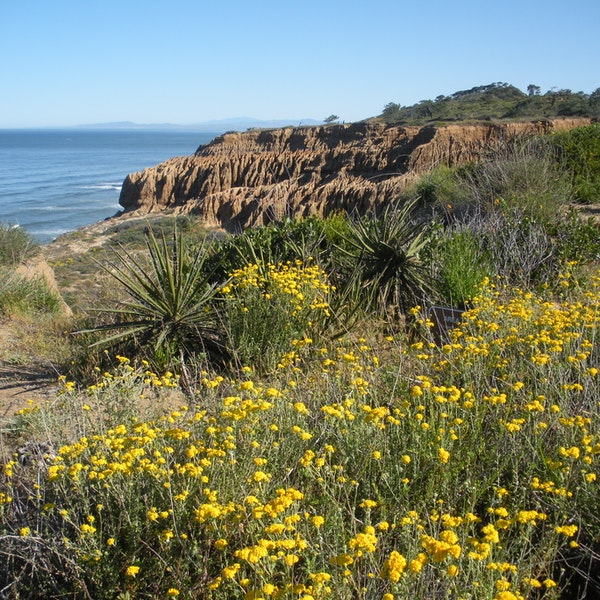 Torrey pines state nature reserve san diego afar for Asian cuisine ocean pines