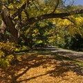 Arnold Arboretum Boston Massachusetts United States