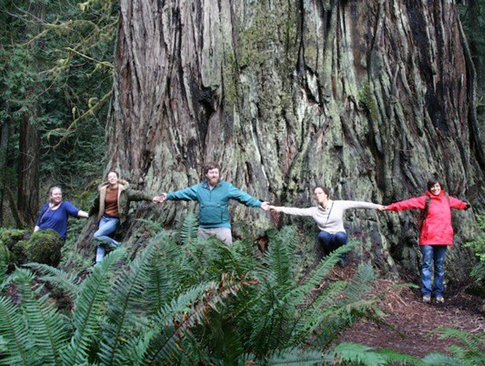 Exploring the Redwoods in Northern California Trinidad California United States