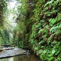 Fern Canyon Orick California United States