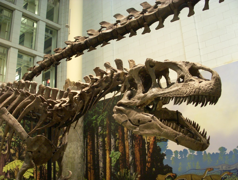 Carnegie Museum of Natural History: Calling All Dinosaur Lovers