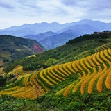 Sapa Highlands Rice Terraces