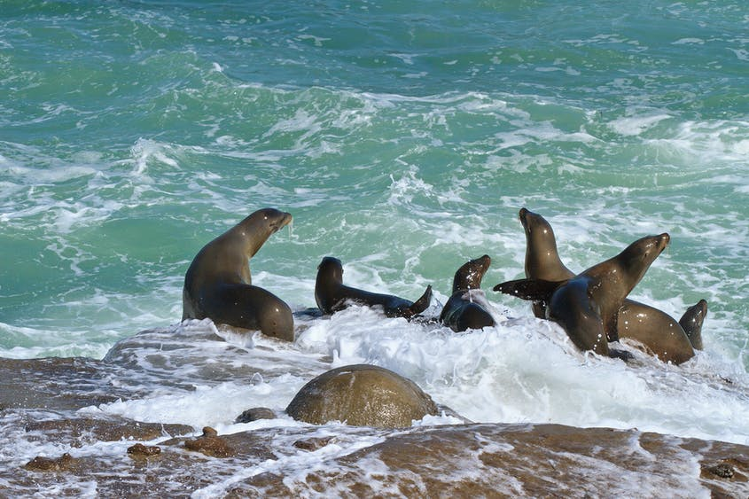 Grab some scuba gear and head into the water with the seals at La Jolla Cove.