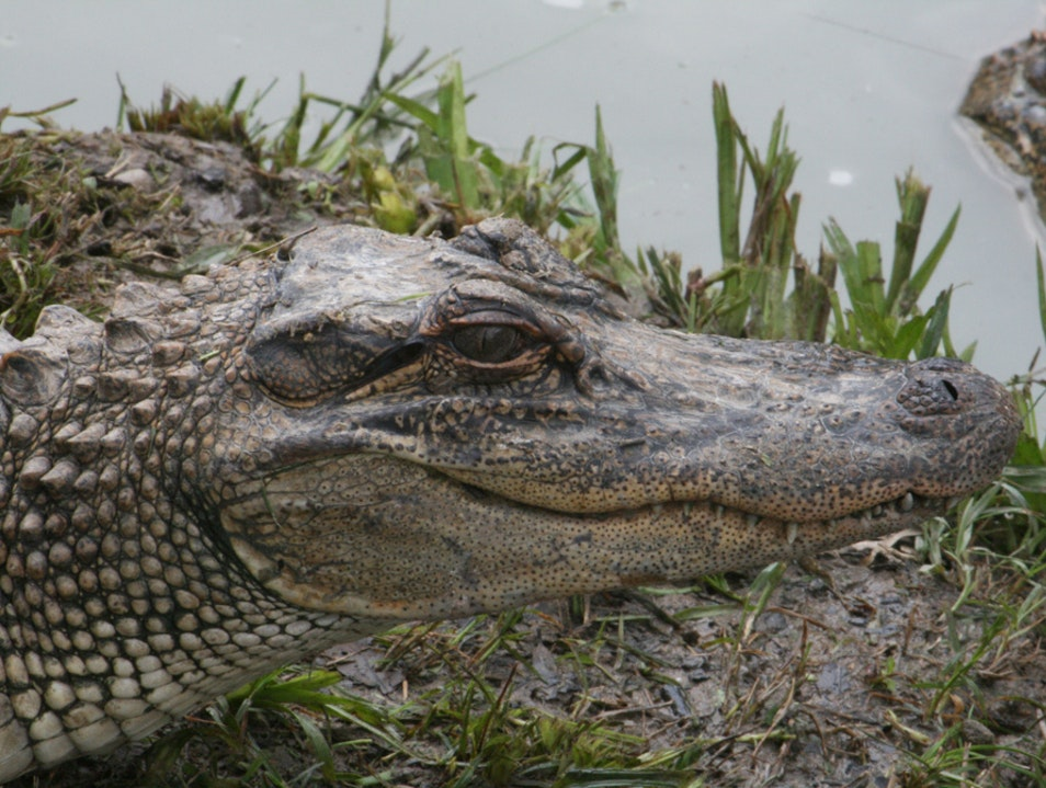 Board a Florida Airboat and Fly Through the Everglades