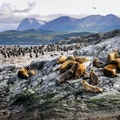 Beagle Channel Cabo De Hornos  Chile