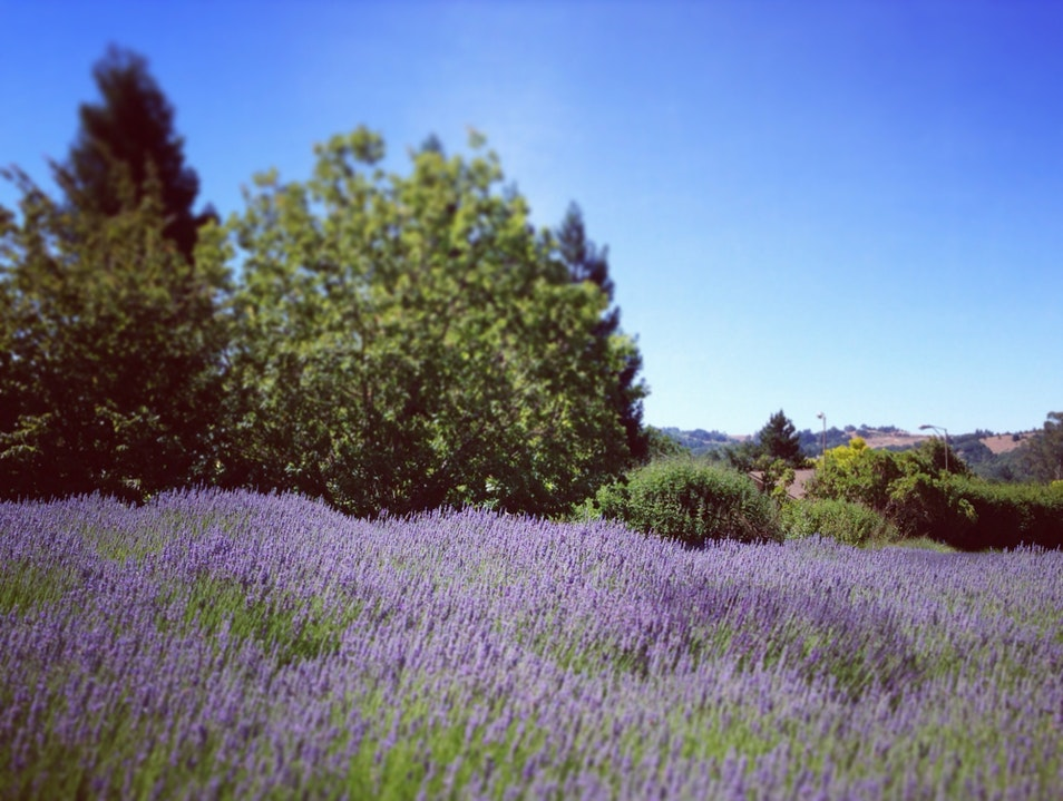The Lavender Life