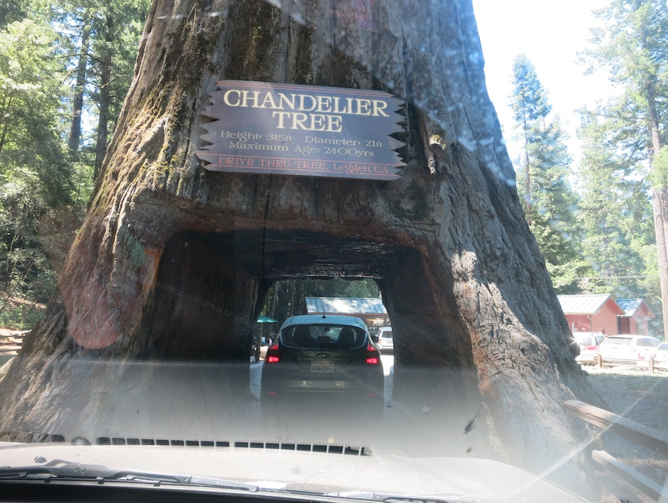Drive Thru Tree in Mendocino County, California LEGGETT California United States