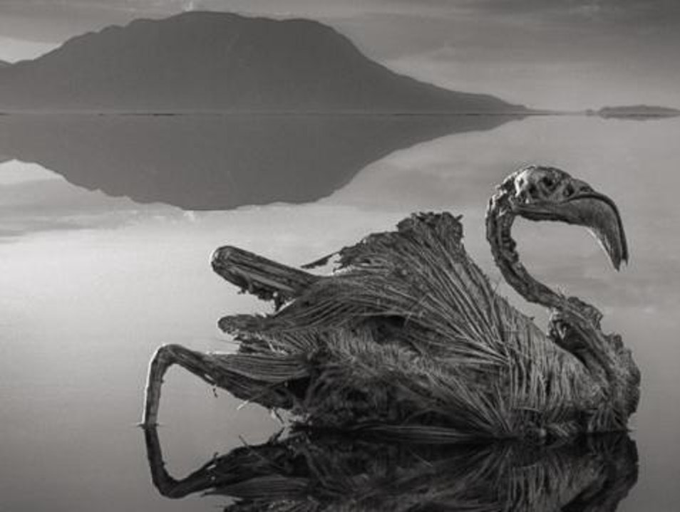 Calcified birds of Lake Natron Monduli  Tanzania