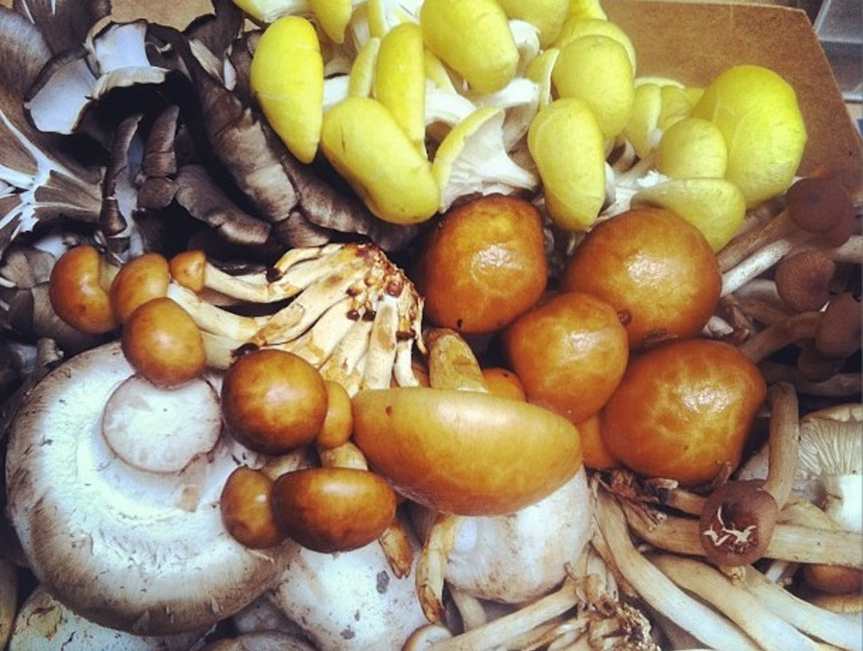 Far West Funghi: Wildly Beautiful & Organic Mushrooms  San Francisco California United States