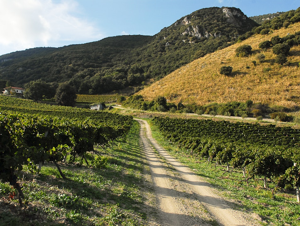 Taste Sicily at the Source at Di Giovanna Vineyards