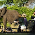 Search for the Big Five Cape Town  South Africa