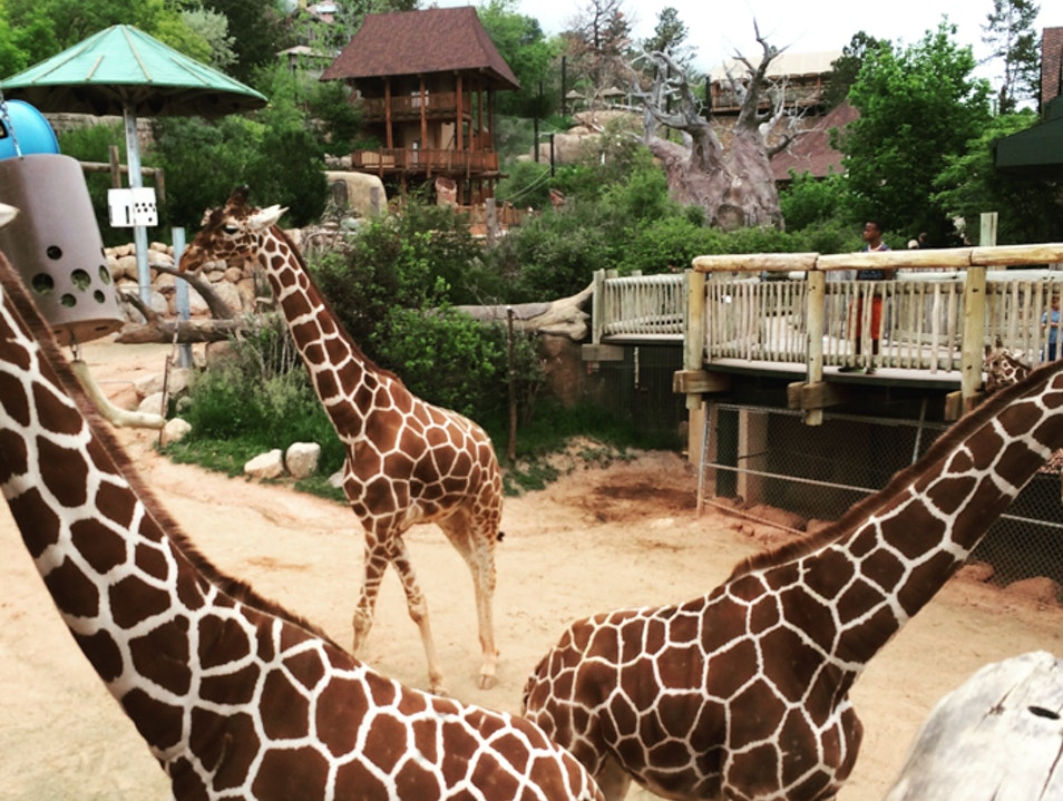 Cheyenne Mountain Zoo: A different kind of zoo Colorado Springs Colorado United States