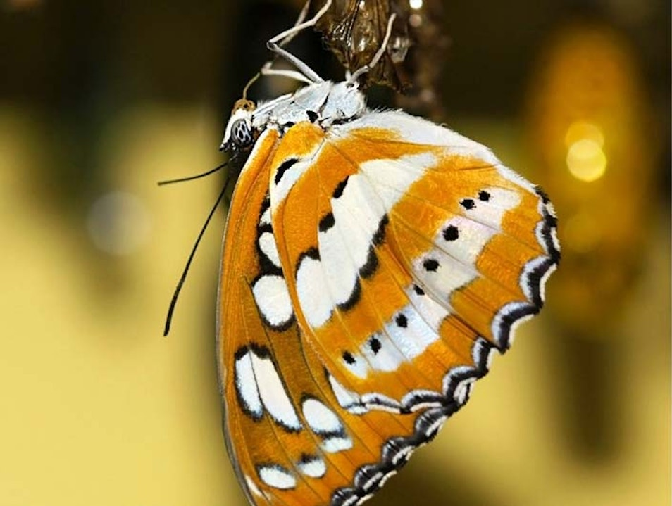 The Butterfly Experience Noord  Aruba